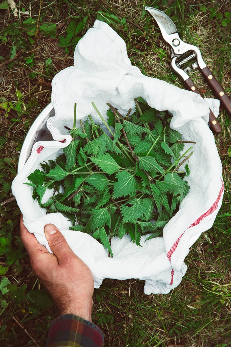 nettle cuttings